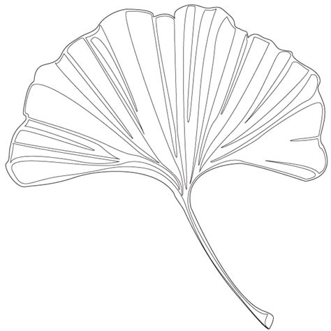 ginkgo leaf coloring page color the leaves to understand the shades of fall my