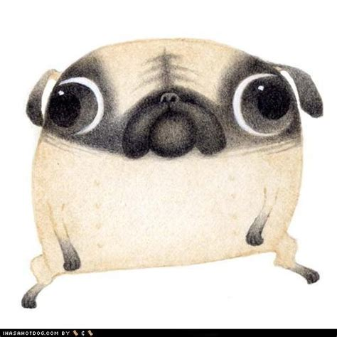 the nut pug 1000 ideas about pug on pug puppies dogs and pug