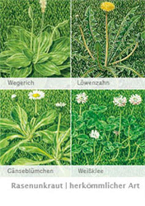 Hilft Kalk Gegen Pilze Im Garten by Mittel Gegen Klee Im Rasen Unkrautvernichter Mit