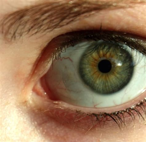 how to change your eye color to hazel fruits and food can change your color to hazel or
