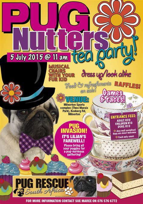 pug rescue cape town pug nutter s tea capetown etc
