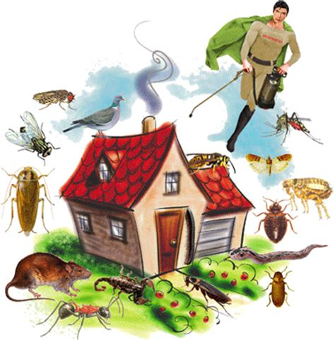 house pest control home pest control horheu bloog pl