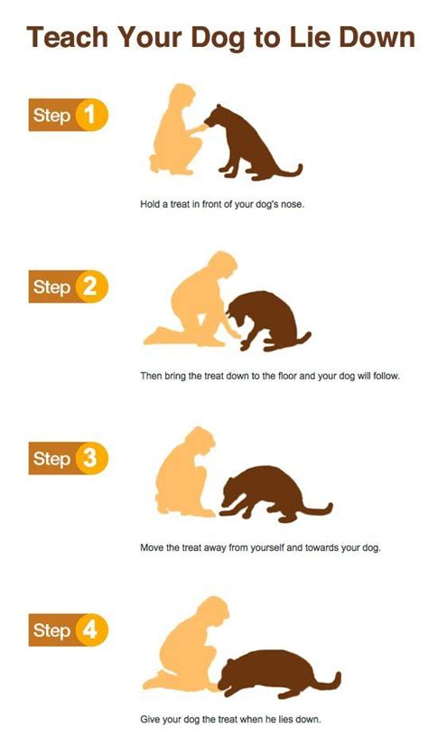 how to dogs to do tricks 25 best ideas about on puppy