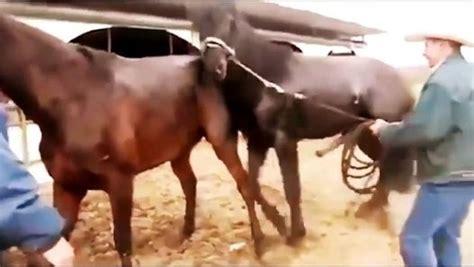 esel beim decken pferdepaarung tiere bei der paarung 2015 dailymotion