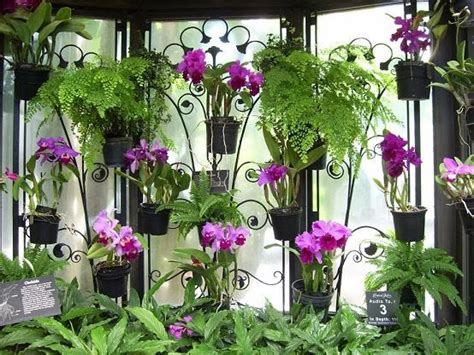 menanam lengkuas hidroponik tanaman bunga anggrek share the knownledge