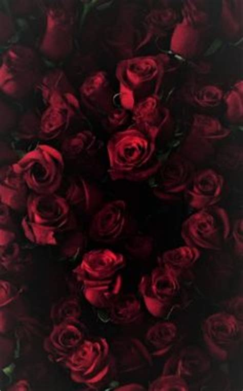 imagenes de rosas oscuras tumblr iphone red roses wallpaper wallpapers