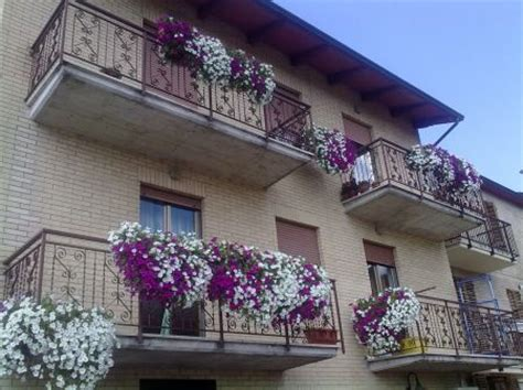 fiori in terrazzo scegli la pianta giusta per abbellire il tuo balcone