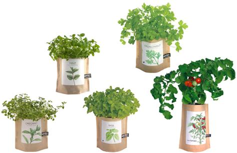 garden   bag grow   culinary herbs indoors
