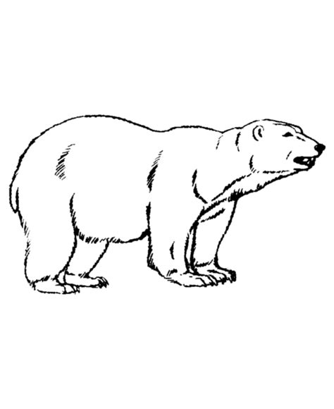 Polar Bear Coloring Page Chuckbutt Com Polar Coloring Pages