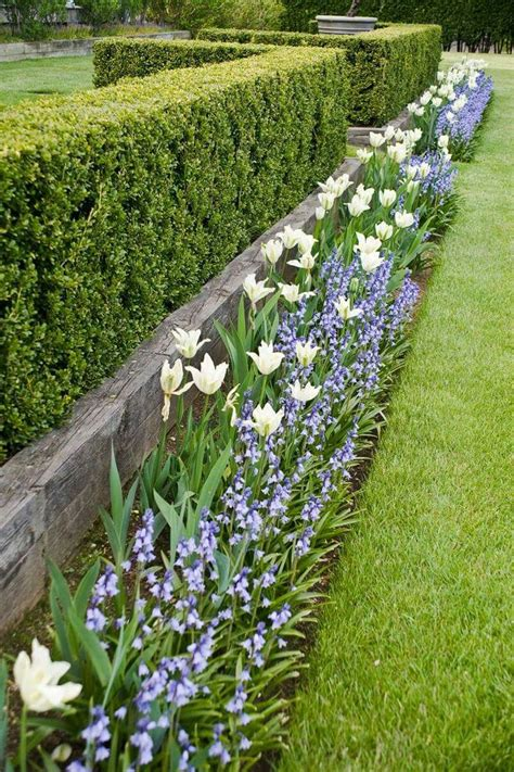 plants for front garden ideas best 25 garden hedges ideas on hedges
