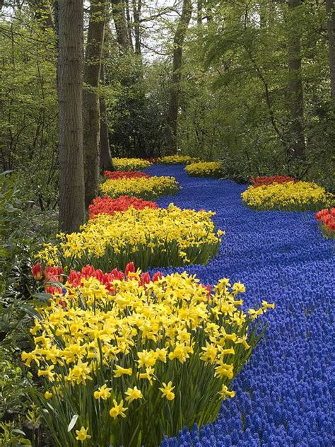 Netherland Flower Garden 17 Best Images About Keukenhof Lisse On Gardens Amsterdam And Europe