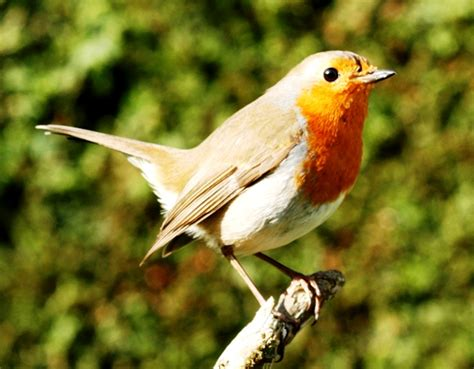 bird pest control natural ways to scare them from the garden