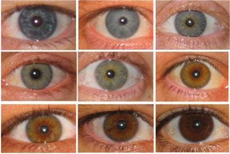 eye color distribution what s the distribution of eye colors in the world quora