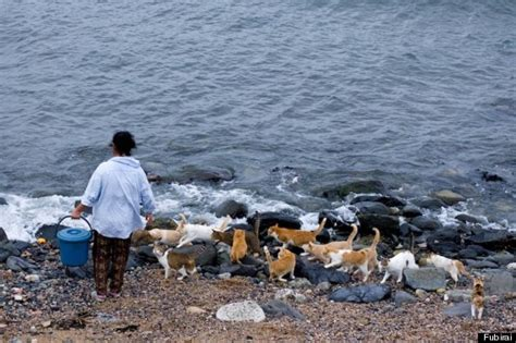 caretaker of japan s cat island is overwhelmed with cat heaven island is the cutest friday escape you will