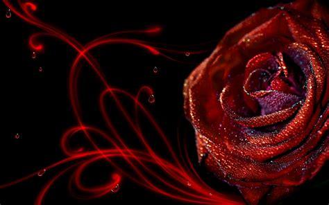 wallpaper hd elegant elegant red roses wallpaper hd wallpaper flowers wallpapers