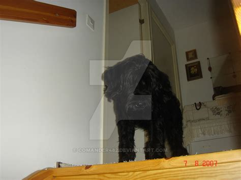 my mom s house my dog at my mom house by comander482 on deviantart