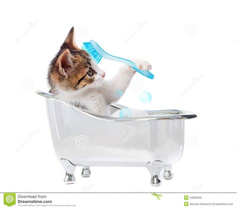 why do cats like bathtubs puppy cat in the bathtub stock photo image of looking