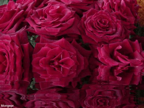 imagenes de rosas movibles y brillantes rosas rojas gif animados imagui