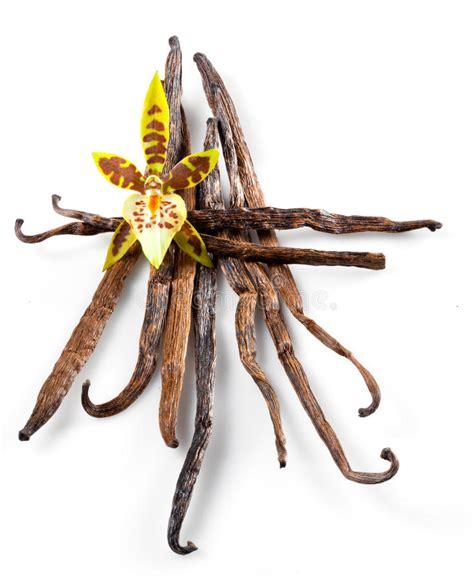 fiore della vaniglia baccelli e fiore della vaniglia isolati su bianco immagine