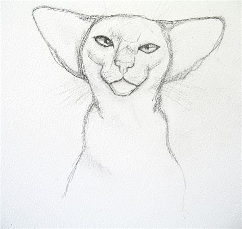 how to draw doodle cat siamese cat drawing feline sapien