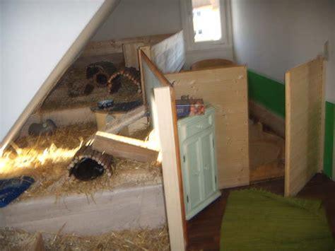 meerschweinchen wohnung kaninchen info meerschweinchen und kaninchen zimmer