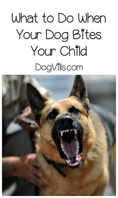 what to do when puppy bites attack what to do when your bites your child dogvills