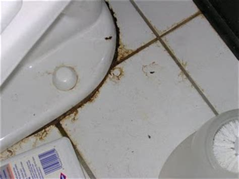 Leaky Kitchen Faucet Handle by Leak Around The Base Of Toilet