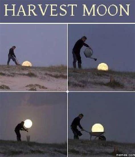 Harvest Moon Meme - home memes com