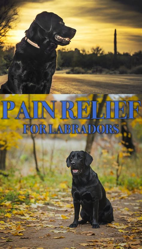 reliever for dogs relief for dogs the labrador site