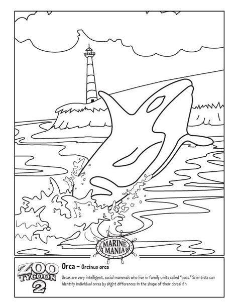 killer whale coloring pages orca whale coloring pages coloring home