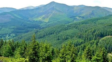 Forest L by Forest Cover In State Raised By 34 Sq Km In 2 Yrs The