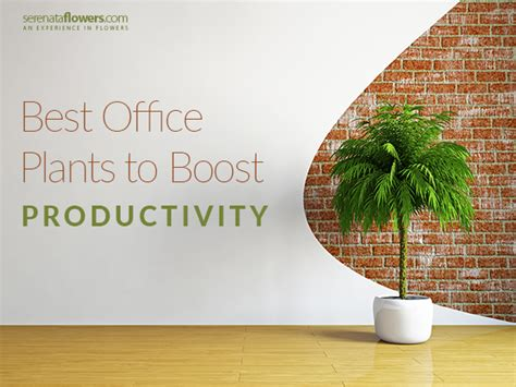 good plants for office best office plants that help to boost your productivity