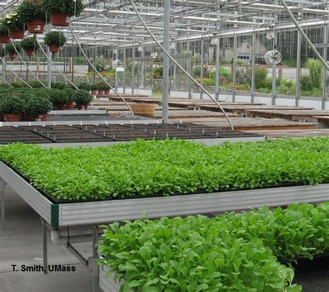 greenhouse floriculture greenhouse greens resources