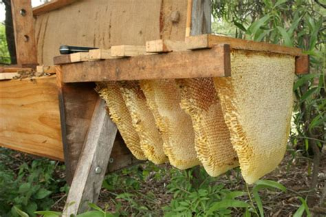 Beehive Top Bar by How To Raise Honey Bees Survival
