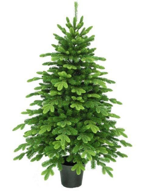 3ft hton spruce potted feel real artificial christmas tree 5ft potted spruce feel real artificial tree beautiful trees