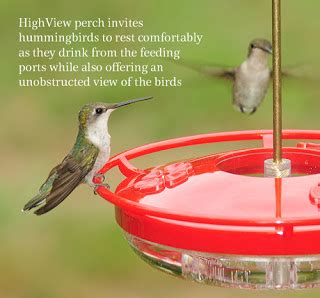 wild birds unlimited when hummingbirds arrive in michigan