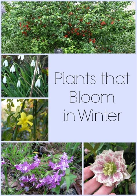 Winter Flowers For The Garden 25 Best Ideas About Winter Garden On