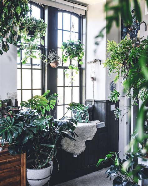 lindo departamento lleno de plantas plantas de