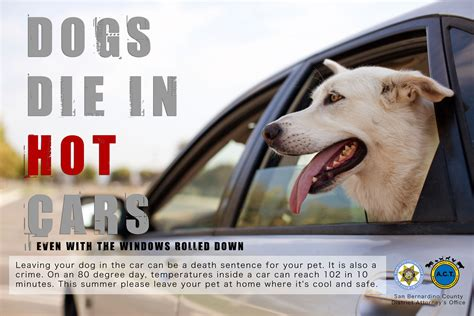 Psa Support Pets Alive by Dogs Die In Cars