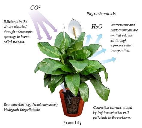 indoor plants to clean air nasa plants clean air house pics about space