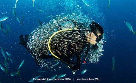 best underwater the best underwater photographs of 2016 are amazing