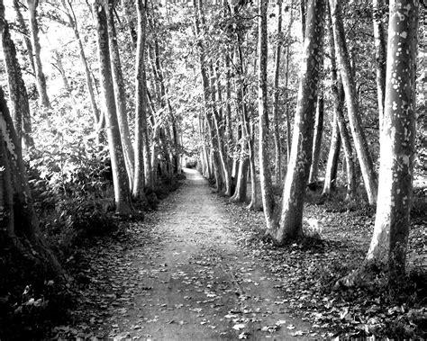 fotos en blanco y negro espectaculares imagenes en blanco y negro taringa