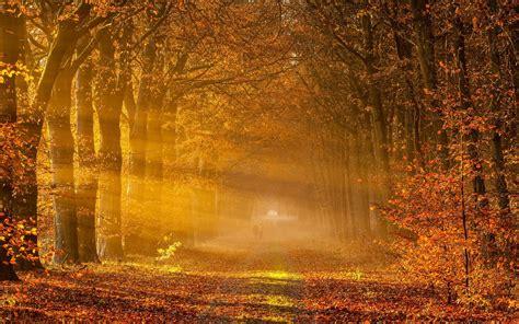autumn road sun rays people wallpapers autumn road sun