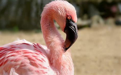 Eagle Flamingo Grey Blue wallpaper flamingo wallpaper