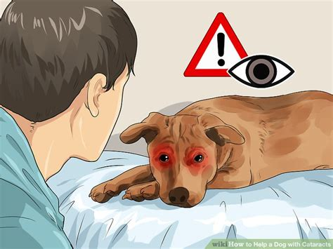 how much is cataract surgery for dogs 4 ways to help a with cataracts wikihow