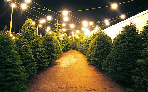 real christmas trees liverpool photo albums 12 places to