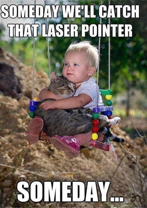 Laser Pointer Meme - cat catch the laser pointer funny pictures dump a day