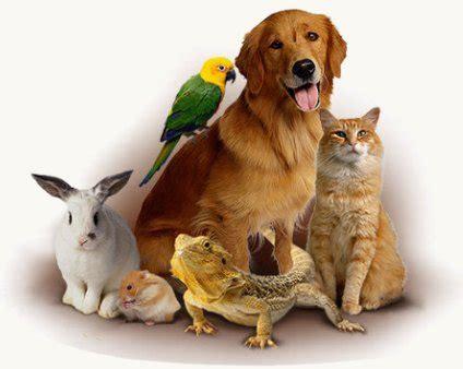elenco animali da cortile nomi per animali domestici cani gatti rettili roditori