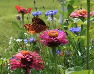 Fall Gardening Plants - butterfly gardening home garden joy