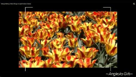 Biji Bunga Peony Biru macam status angkola tulip pengertian sejarah